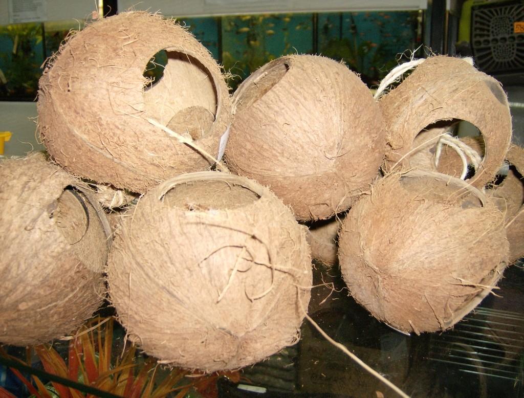 kokosy1